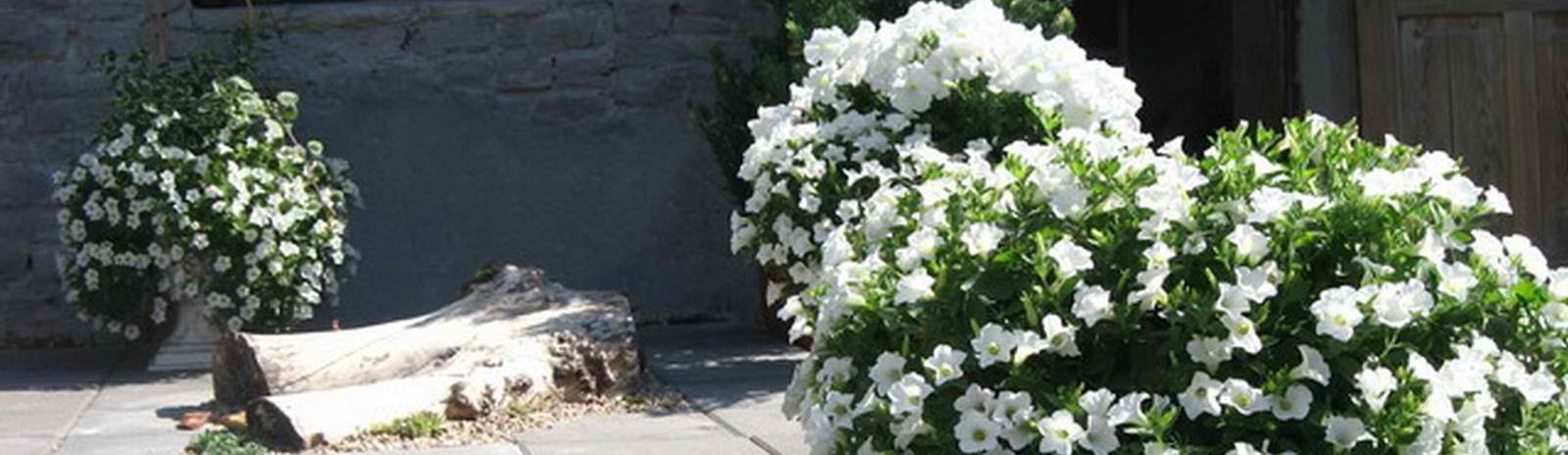 Kwiaty Zawada